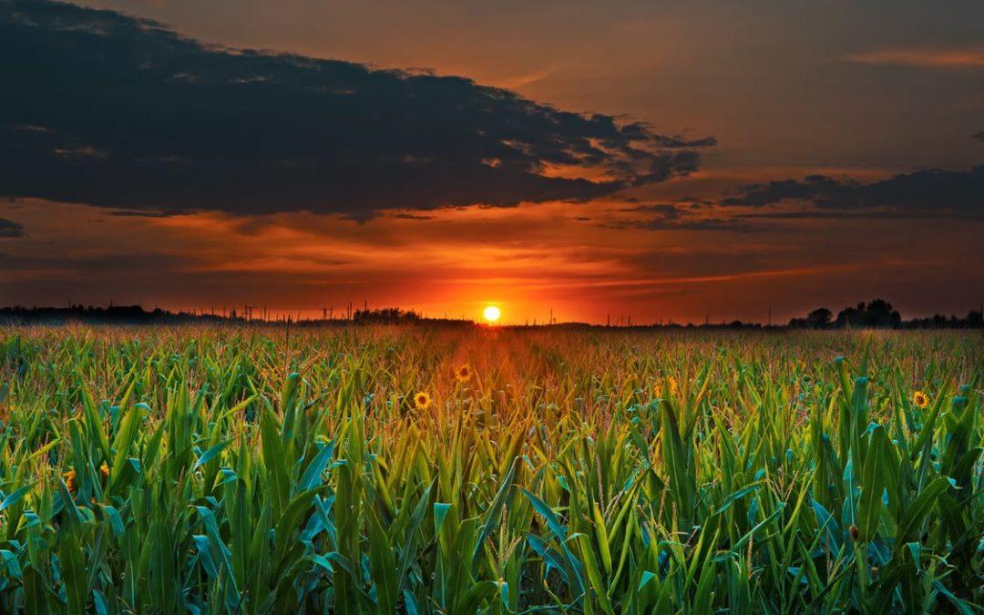 Sunflower State Kansas DUI